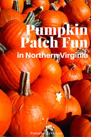North Plains Pumpkin Patch by 2017 Pumpkin Patch Fun In Northern Virginia Fun In Fairfax Va