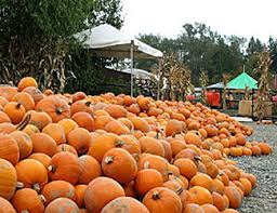 Glass Blown Pumpkins Seattle by Bellevue Halloween Guide 2017 Pumpkin Patches Pumpkin Farms