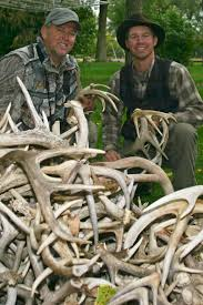 Does Deer Shed Their Antlers by How To Hunt For Whitetail Deer Antler Sheds Bullseye Hunting