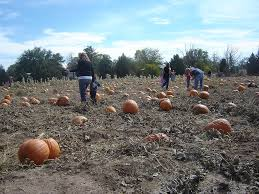 Macdonald Ranch Pumpkin Patch Hours by Arizona Pumpkin Patches Find Pick Your Own Pumpkins