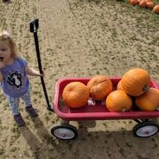 Livermore Pumpkin Patch by G U0026m Farms 133 Photos U0026 107 Reviews Attraction Farms 487 E