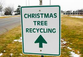 1225 Christmas Tree Lane by Christmas Tree Recycling Galway Rainforest Islands Ferry