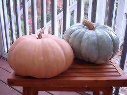 Varieties Of Pie Pumpkins by Pumpkins To Waffles