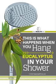 Best Plant For Bathroom Australia by See What Happens When You Attach Eucalyptus To Your Shower Head