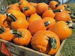 Bishops Pumpkin Patch by 5 Unexpected Reasons To Hit This Prolific Pumpkin Patch
