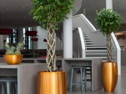 pflanzkübel zimmerpflanzen und moosbilder kaufen