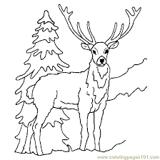 Deer Ice Coloring Page