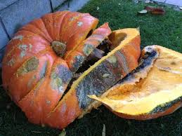 Keep My Pumpkin From Rotting by How To Make A Compost Bin