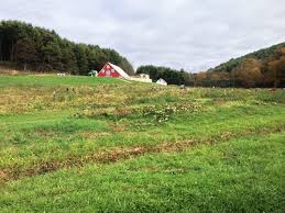 Christmas Tree Farms In Boone Nc by New River Corn Maze Boone Nc Pumpkin Patch North Carolina