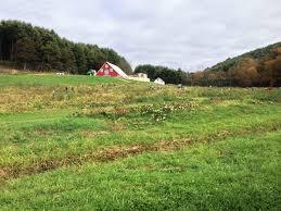 Best Pumpkin Patch Charlotte Nc by New River Corn Maze Boone Nc Pumpkin Patch North Carolina