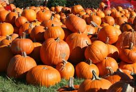 Pumpkin Patch In Long Island New York by Nature Discovery Center Pumpkin Patch Fall Festival Mommypoppins