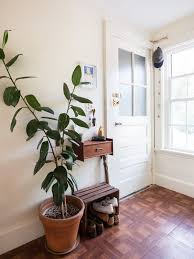 Best Pot Plant For Bathroom by Rubber Plant Our Best Tips For Growing And Care Apartment Therapy