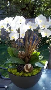 entretien des orchidées savoir tout sur ces fleurs exotiques