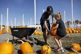 Petaluma Pumpkin Patch Corn Maze Map by Sonoma County Pumpkin Patch Owners Report Sales Slump In Fires U0027 Wake