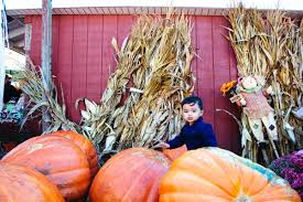 Nj Pumpkin Picking by Discovering Fall Pumpkin Picking U2014 Simply Picture This