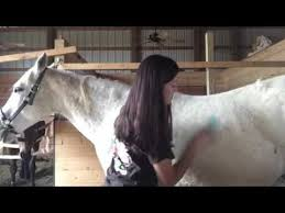 Horse Coat Shedding Tool by Sleekez Vs Equigroomer Which Shedding Tool Is Best Horses
