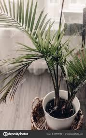 hausgartenpflanzen pflege grünpflanzen große grüne palme