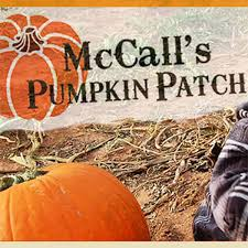Mccalls Pumpkin Patch Albuquerque Nm by Mccall U0027s Pumpkin Patch Passes Contest 100 3 The Peak