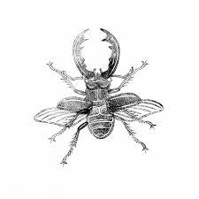 Coloriage à Imprimer Animaux Insectes Numéro 673128
