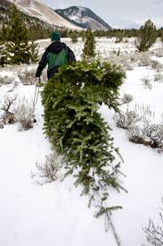 Ticks On Christmas Trees by Tips For Hunting Down That Perfect Christmas Tree Local