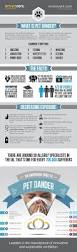 Domestications Curtains And Blinds by Best 25 Pet Infographic Ideas On Pinterest Puppy Facts Dog
