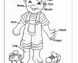 Convenient Free Coloring Pages Of My Body Part Handy For Kids