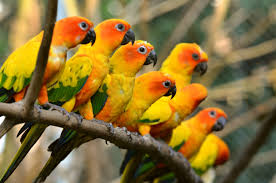 Parrot Caught Singing Bodies Hit The Floor by 135 Parrot Hd Wallpapers Backgrounds Wallpaper Abyss Best