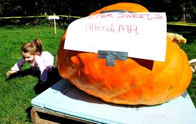 Pumpkin Patch Ct by Pumpkin Weigh Off Returns To Ridgefield Newstimes