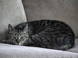 cat sofa you can now buy a matching sofa for you and your cat s world