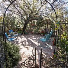 Indian Laurel Columns Hedge Trees Moon Valley Nursery