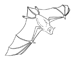Bat Pages For Kids Clipart