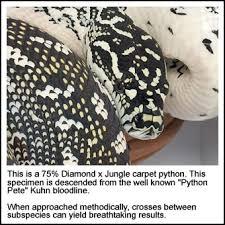 Coastal Carpet Python Facts by Coastal Carpet Python Tank Size U2013 Meze Blog