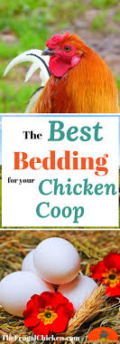 The Best Bedding For Backyard Chickens [Podcast] | Backyard ... Chicken Coops Southern Living Best Coop Building Plans Images On Pinterest Backyard 10 Free For Chickens The Poultry A Kit W Additional Modifications Youtube 632 Best Ducks Images On 25 Diy Chicken Coop Ideas Coops Pictures With Material Inside 2949 Easy To Clean Suburban Plans