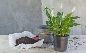 luftreinigende pflanzen diese 10 filtern schadstoffe am besten