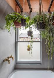 Plants For The Bathroom Feng Shui by Best 25 Plants In Bathroom Ideas On Pinterest Bathroom Plants