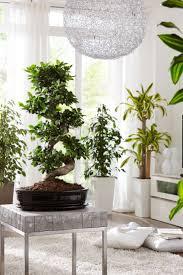 fernost flair für dein zuhause bonsai pflanzen bonsai