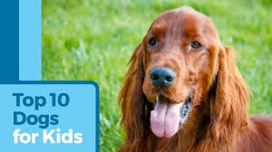 Top 10 Dogs That Dont Shed by The 10 Best Dogs For Kids And Families Petmd