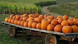 Wisconsin Pumpkin Patches 2015 by Corn Mazes Pumpkin Patches And Fall Family Fun U2013 Northeast Wi