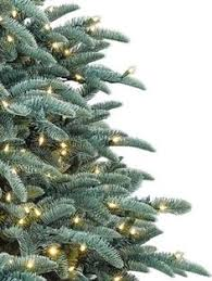 Fraser Fir Artificial Christmas Tree Sale by Frosted Fraser Fir Narrow Artificial Christmas Tree Balsam Hill