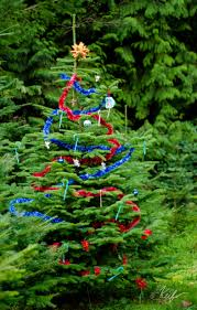 Christmas Tree Species Canada by About Ubc Christmas Tree Farm
