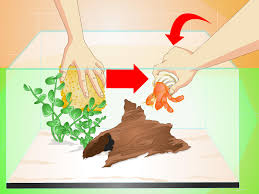 Halloween Hermit Crab Reef Safe by 3 Ways To Know When Your Hermit Crab Is Dead Wikihow