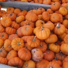 Pumpkin Farm Illinois Best by Curtis Orchard U0026 Pumpkin Patch 77 Photos U0026 54 Reviews American