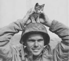 service cats ship cats service animals in wartime fixnation