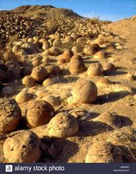 South Boulder Pumpkin Patch by Sandstone Concretion Stock Photos U0026 Sandstone Concretion Stock
