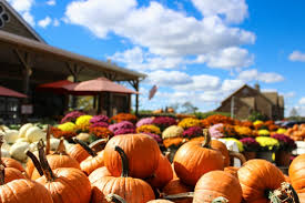 Oklahoma Pumpkin Patches by Wild Things Farm Archives Toyota Of Ardmore