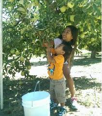 Pumpkin Patches Near Bakersfield Ca by Kern County California Kern County California U Pick Farms Find
