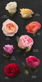 National Rose Month The Meaning of Rose Colors