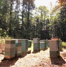 Xmas Tree Farms Albany Ny by Rulison Honey Farms Home Facebook