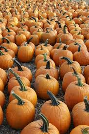 Pumpkin Picking Pa by Ultimate Fall Guide The Best Apple Orchards In Tri State Area