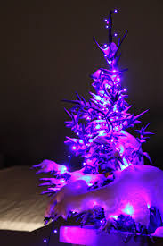 Martha Stewart Christmas Trees At Kmart by Purple Trees Purple Christmas Tree Free Stock Photo Hd Public